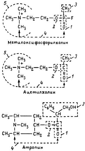 витамин f химическое строение