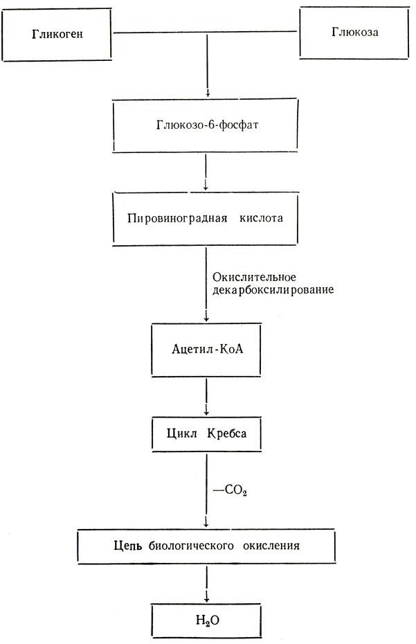 Схема 3. Аэробное окисление